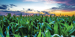 Proteger o investimento em azoto otimiza o rendimento da sua colheita